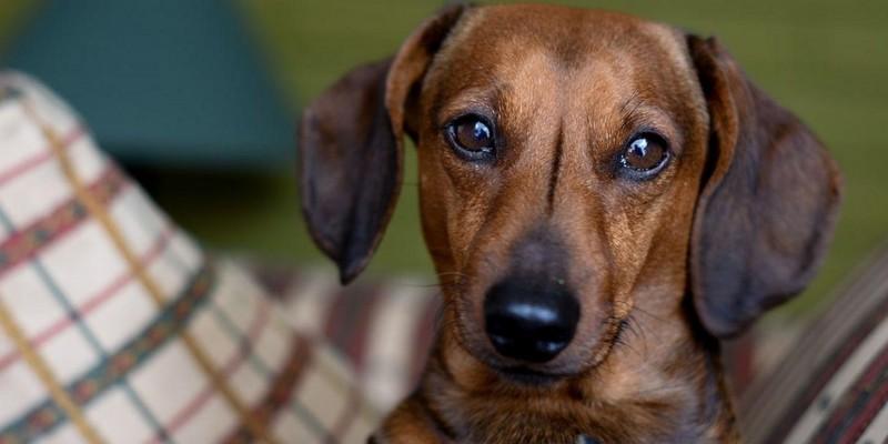Cinco cosas que no le gustan a los perros y que generalmente hacen sus dueños
